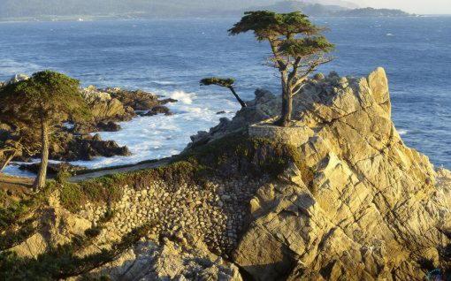 Кипарис на скале Калифорния