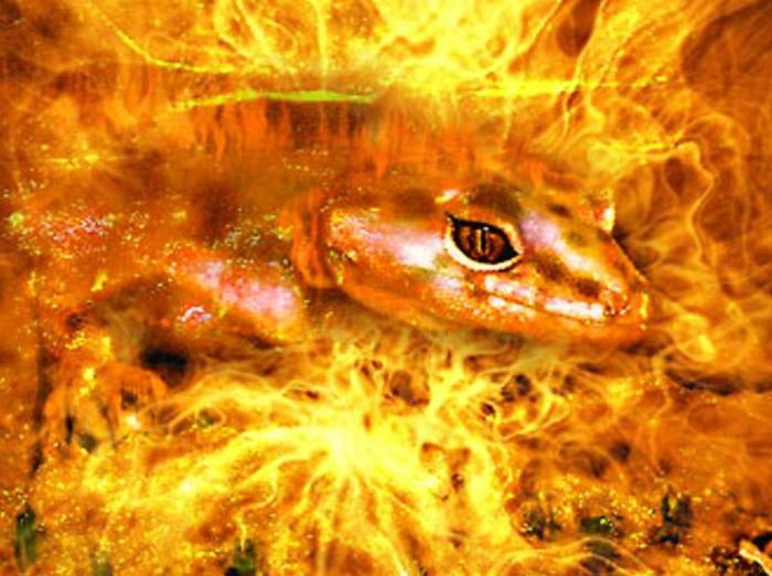 Саламандры — духи огня