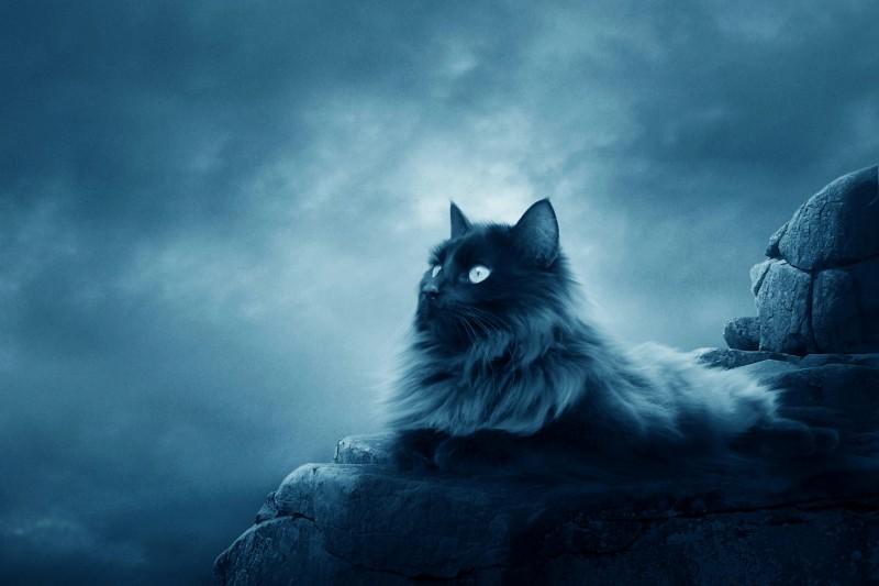 Ирусан — ирландский король котов