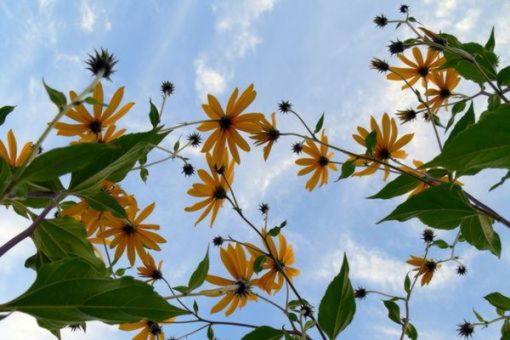 Май, италийский бог, покровитель роста растений